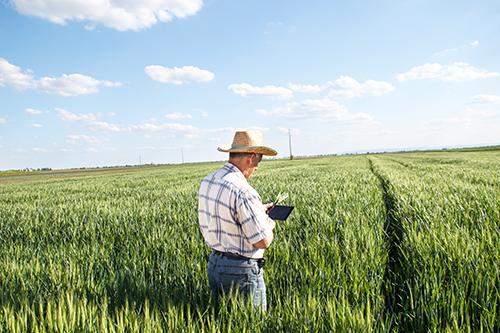 Rural America's Internet